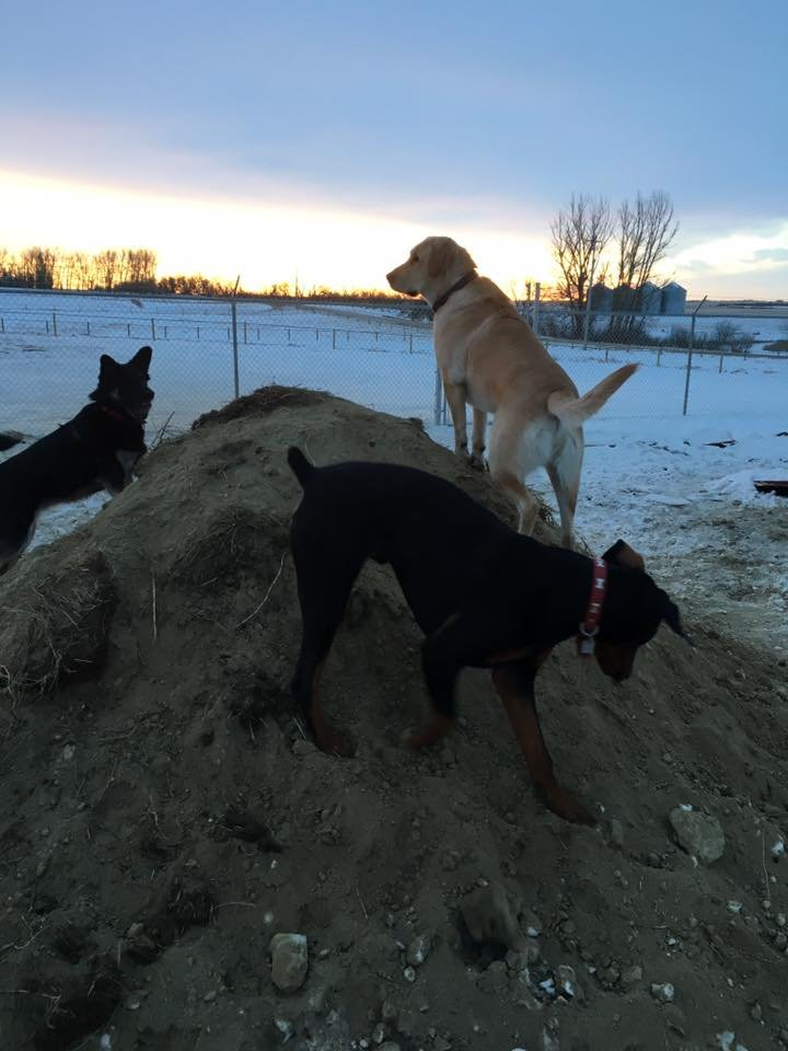 dogs playing on the berm
