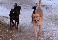 dogs having a blast together during pack play